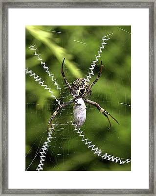 Framed Print featuring the photograph Orb Weaver by Joy Watson