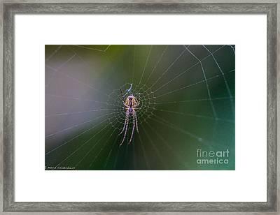 Orbweaver Framed Print