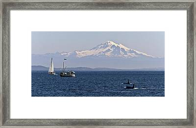 Orca's And Mt Baker Framed Print