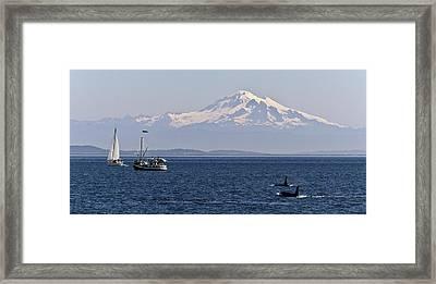Orca's And Mt Baker Framed Print by Tony Locke