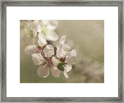 Orchard In Spring Framed Print by Cheryl Butler
