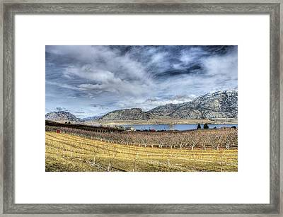 Orchards And Vineyards Framed Print by John  Greaves