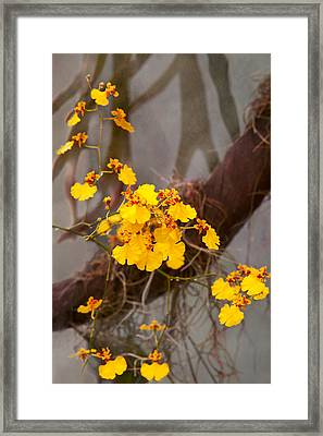 Orchid - Golden Morning  Framed Print by Mike Savad