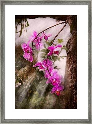 Orchid - Tropical Passion Framed Print by Mike Savad