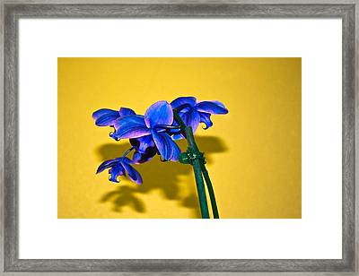 Orchid #1 Framed Print by David Alexander