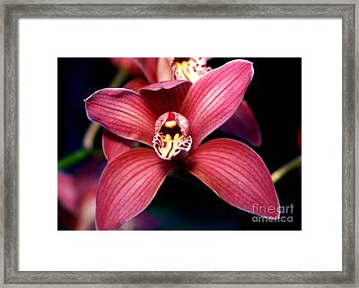 Orchid 16 Framed Print by Terry Elniski