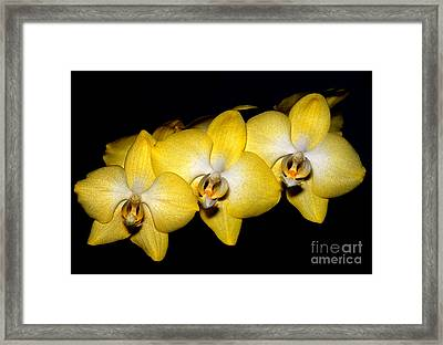 Orchid 19 Framed Print by Terry Elniski