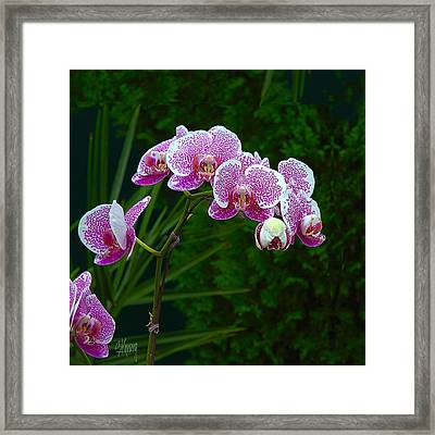 Orchid 2 Framed Print