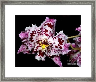 Orchid 20 Framed Print