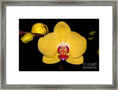 Orchid 24 Framed Print by Terry Elniski
