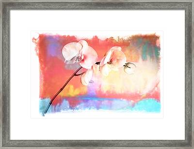Orchid 3 Framed Print by Mauro Celotti