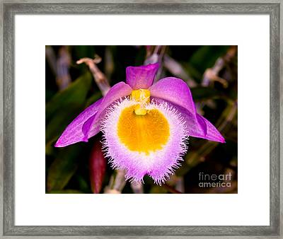 Orchid 31 Framed Print