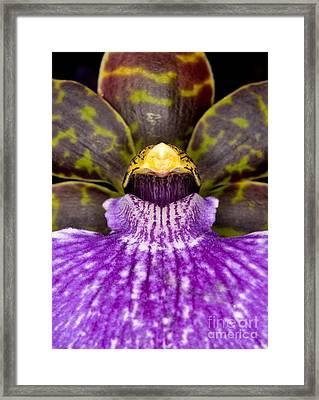 Orchid 37 Framed Print
