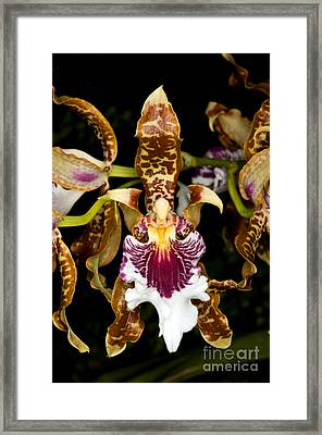 Orchid 41 Framed Print by Terry Elniski