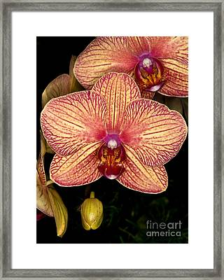 Orchid 45 Framed Print