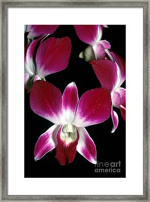 Orchid 49 Framed Print by Terry Elniski