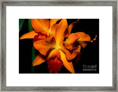 Orchid 52 Framed Print by Terry Elniski