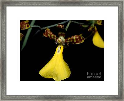 Orchid 54 Framed Print by Terry Elniski