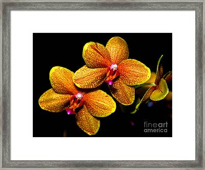 Orchid 58 Framed Print by Terry Elniski