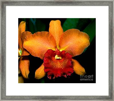 Orchid 6 Framed Print by Terry Elniski