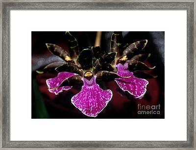 Orchid 65 Framed Print