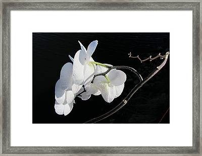 Orchid Above River Framed Print