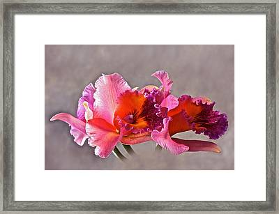Orchid And Fog Framed Print by Byron Varvarigos