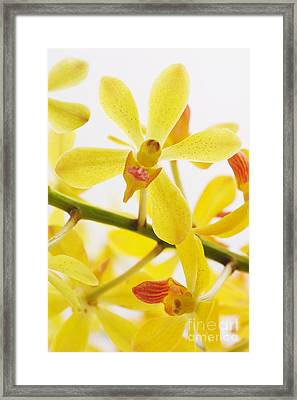 Orchid Framed Print by Atiketta Sangasaeng