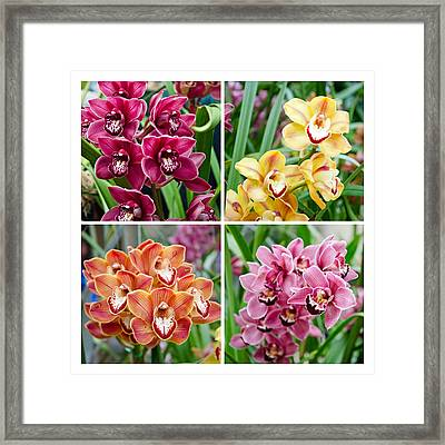 Orchid Collage Framed Print