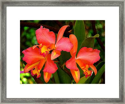 Orchid Dream Framed Print by Blair Wainman