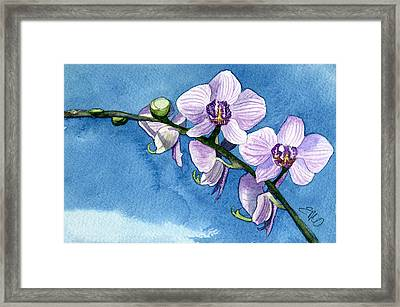Orchid Framed Print by Eunice Olson