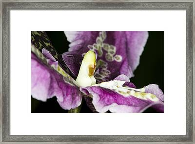Framed Print featuring the photograph Orchid Flower Blossom by C Ribet
