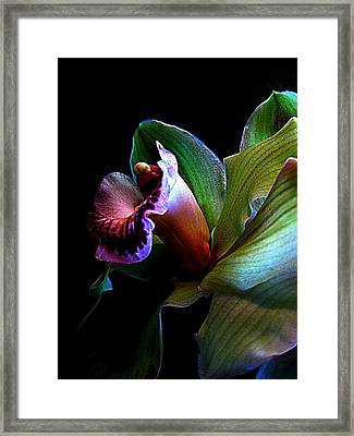 Orchid Gem Framed Print by Shirley Sirois