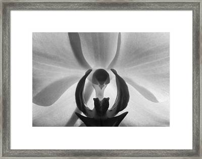 Framed Print featuring the photograph Orchid Heart by Kume Bryant
