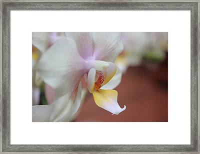 Framed Print featuring the photograph Orchid II by Kelly Hazel