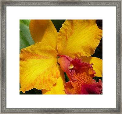 Orchid No. 21 Framed Print by Gregory Young