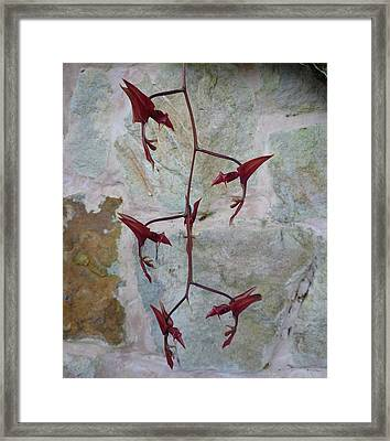 Orchid No.22 Framed Print by Gregory Young