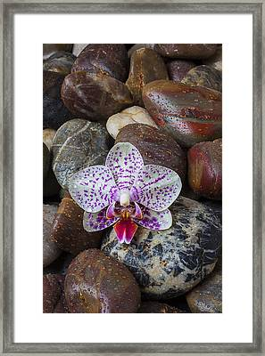 Orchid On Wet Rocks Framed Print by Garry Gay