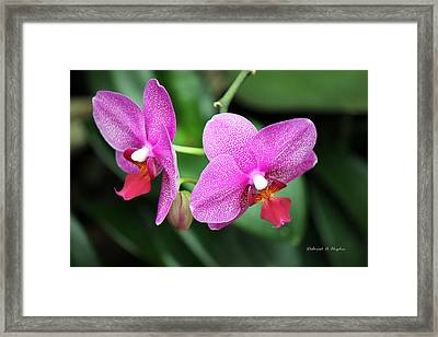 Orchid Purple Framed Print