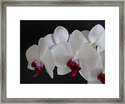Orchid Framed Print