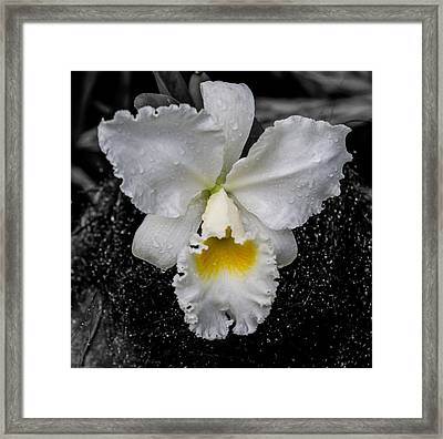 Orchid Shower Framed Print