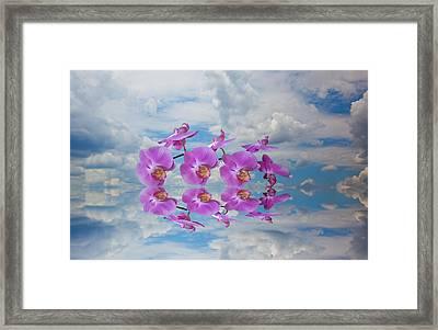 Orchid Sky Framed Print by Sarah McKoy