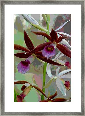 Orchid Sonata Framed Print by Suzanne Gaff