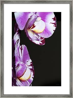 Orchid Stem Framed Print by Phyllis Denton
