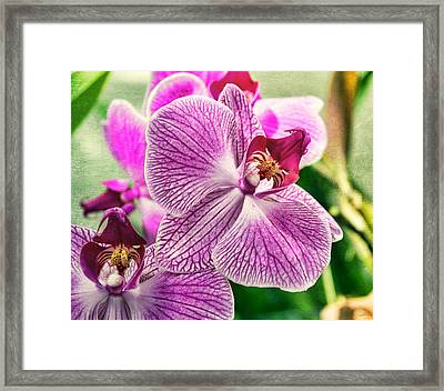 Orchid Textures Framed Print