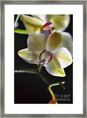 Framed Print featuring the photograph Orchidee by Sylvie Leandre