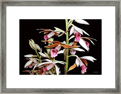 Orchids 006 Framed Print by George Bostian