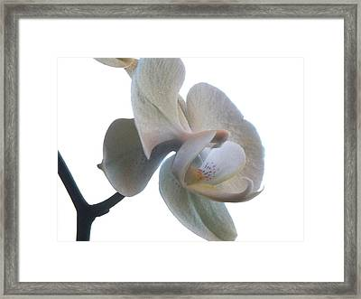 Orchids 1 Framed Print by Mike McGlothlen