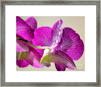 Orchids And Raindrops Framed Print