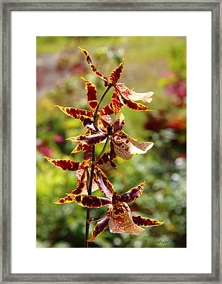 Framed Print featuring the photograph Orchids Catching Morning Sunshine by Kerri Ligatich